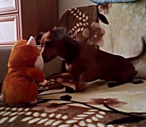 Dachshund and talking hamster