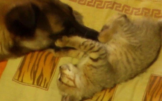 cat and dog playng
